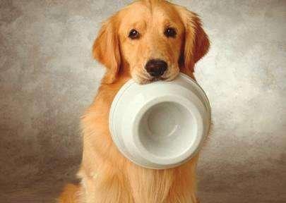 狗粮在开封之后应该怎么保存